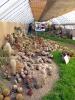 Výstava květin Čimelice 2011_20