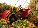 Výstava květin Čimelice 2011_53