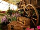 Výstava květin Čimelice 2011_52