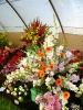 Výstava květin Čimelice 2011_58