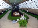 Výstava květin Čimelice 2011_6