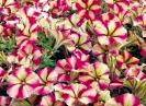 Květináče velké